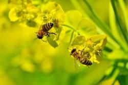Видеоняня для насекомых. Как российский стартап помогает пчеловодам
