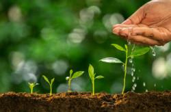 Ученые впервые проследили за процессом роста на самом раннем этапе созревания семян