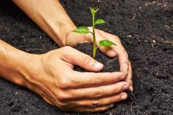 Приманить и обезвредить: создан новый метод выявления вредителей растений