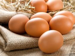 Финалистов The Egg-Tech Prize объявят осенью