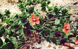 Ученые выявили, как деятельность человека влияет на растительный покров