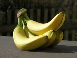 CRISPR использовали для спасения бананов