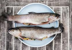 Ученые сравнили риск от хлорорганики в дикой и фермерской рыбе