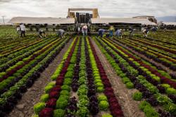 У сельского хозяйства – ключ к природным решениям