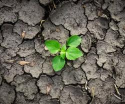Математическая модель поможет выбрать культуры для предотвращения засух