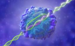 Создана более направленная система редактирования генома