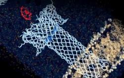 Токсин сделали биосенсором