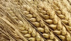 Мексика: опыт в глубокой переработке кукурузы