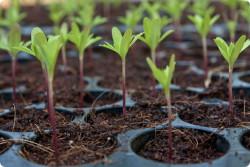Возможности биотехнологического выращивания лекарственных растений изучают в Центре технологий при АН Туркменистана