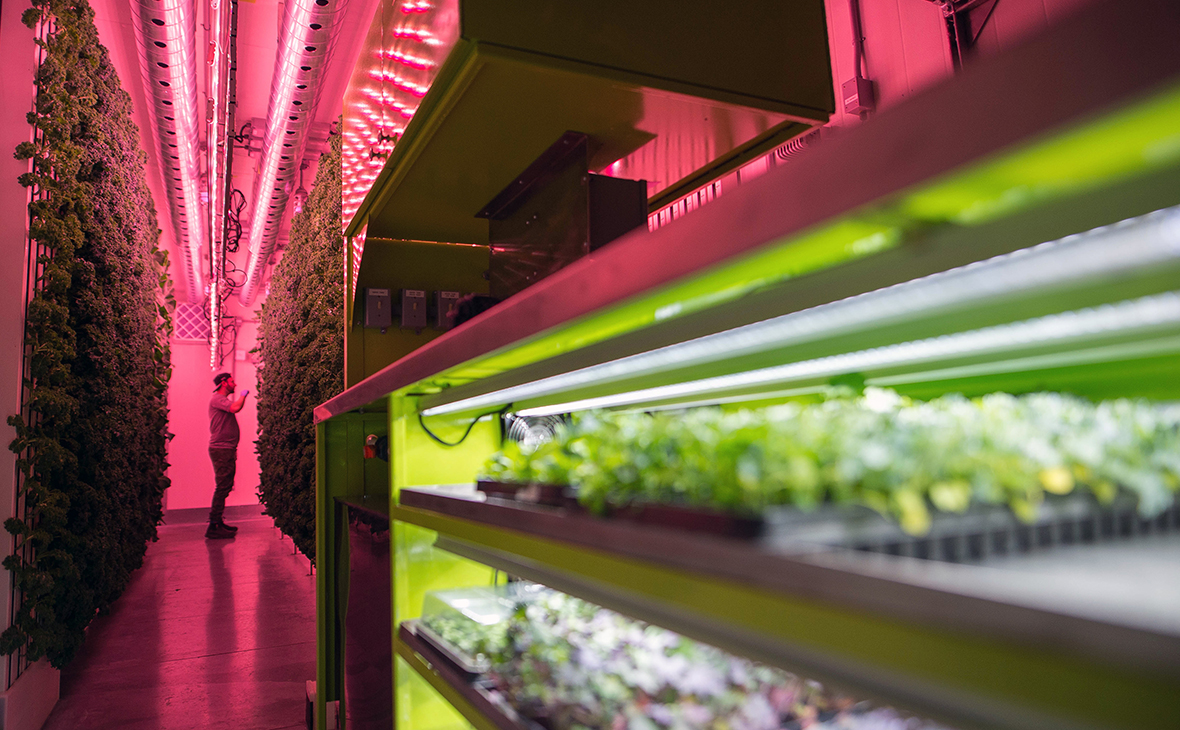 An employee inspects a wall of kale and greens growing vertically inside a modular farming unit at Modular Farms Co. headquarters in Brampton, Ontario, Canada, on Friday, Aug. 11, 2017. The popularity of modular farms is slowly gaining in Canada as consumers seek more locally and sustainably-grown produce, Ontario-based Modular Farms CEO Eric Amyot said, a startup that designs and manufacturers container farm systems. The company's systems can be used to grow things such as kale, lettuce and herbs, and it is also test growing other crops including cucumbers and tomatoes, he said. Photographer: James MacDonald/Bloomberg