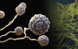 Раскрыт механизм синтеза антибиотиков в природе