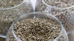 Ученые предложили синтезировать наноцеллюлозу из соломы и овса