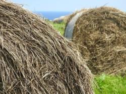 Отходы биомассы превратят в ценные химикаты