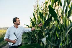 Большинство крупнейших продовольственных компаний работают над развитием растительной еды