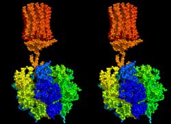 В «молекулярном моторе» нашли лишнюю деталь