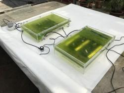 Фотосинтезирующие микроорганизмы помогут городу очистить воду