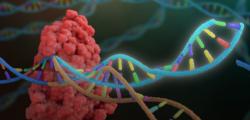 Российский Центр редактирования генома займется только теоретическими исследованиями
