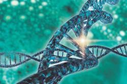 УЧЕНЫЕ СООБЩАЮТ О ШЕСТИ НОВЫХ ВАРИАНТАХ CRISPR-CAS12A В РАСТЕНИЯХ