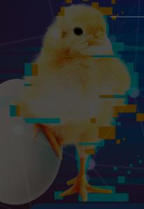 28 — 29 ноября 2020 года  —  Международная онлайн-конференция «Global Poultry Web Congress»