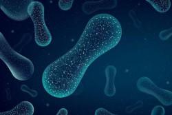 DUPONT NUTRITION & BIOSCIENCES ЗАПУСКАЕТ ИННОВАЦИОННЫЙ ФИТАЗНЫЙ ПРЕПАРАТ