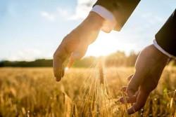 22-25 сентября 2020 года  —  XXI Международный зерновой раунд «Рынок зерна — вчера, сегодня, завтра»