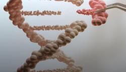 В ГЕНОМНЫЙ РЕДАКТОР CRISPR/CAS9 ВСТРОИЛИ ПРОГРАММИРУЕМЫЙ «ВЫКЛЮЧАТЕЛЬ»