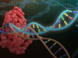 НАНОТЕЛА ПОМОГУТ CRISPR ВКЛЮЧАТЬ И ВЫКЛЮЧАТЬ ГЕНЫ В КЛЕТКАХ