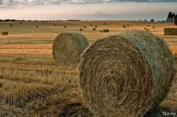 ОТКРЫТ ПРИЕМ ЗАЯВОК НА КОНКУРС АГРОТЕХ-ПРОЕКТОВ AGRO TECH CHALLENGE